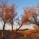 腾格里沙漠攻略图片