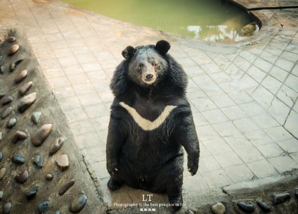 —攀枝花赏花线  小朋友们看完动物后,可以去动物园外面的游乐园玩玩