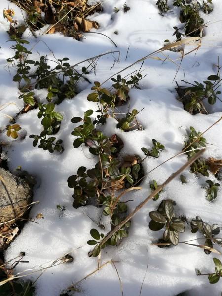 雪地里的小脚印,下雪啦下雪啦, 小猪画什么,小鹿画什么,小鸡画图片