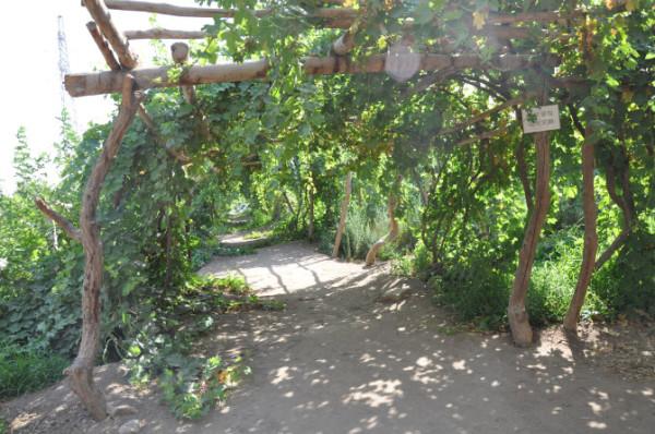 之葡萄沟藤蔓缠绕,硕果高悬,果真养眼馋人也.置身其间,莫不感叹天佑