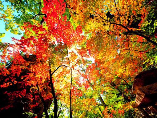 东北赏秋 吉林蛟河红叶谷 长白山天池秋色 中华枫叶大道 本溪洋湖沟图片