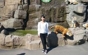 【虎林图片】哈尔滨虎林园, 触手可及的老虎,不一样的感觉