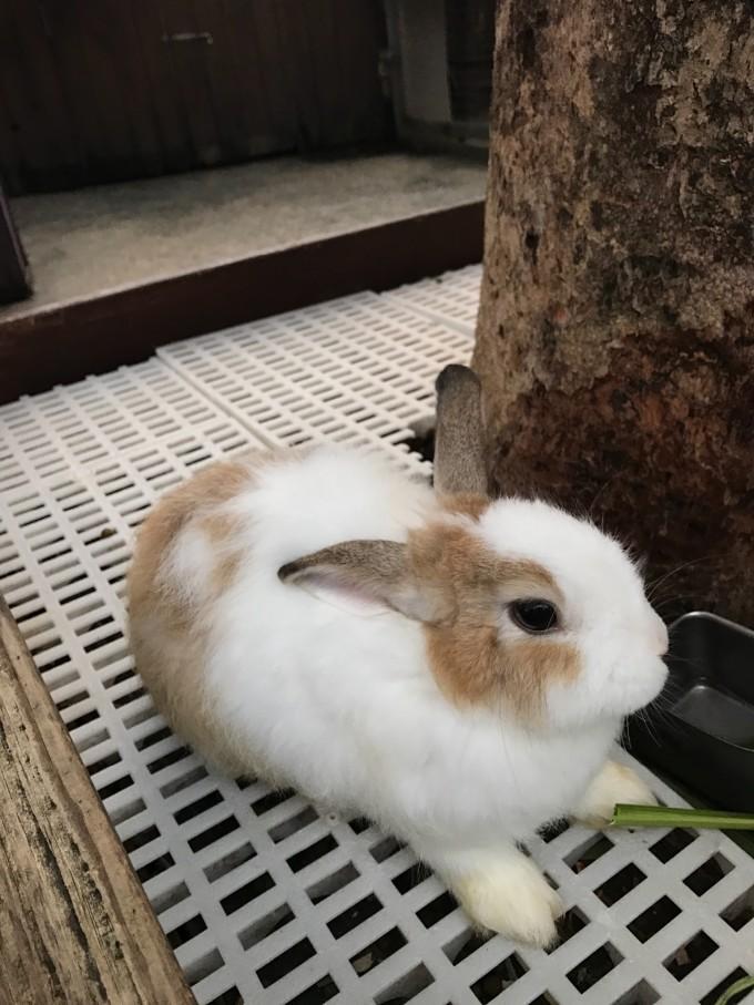 文艺范可爱兔子背景图