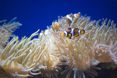 海里的海葵图片大全