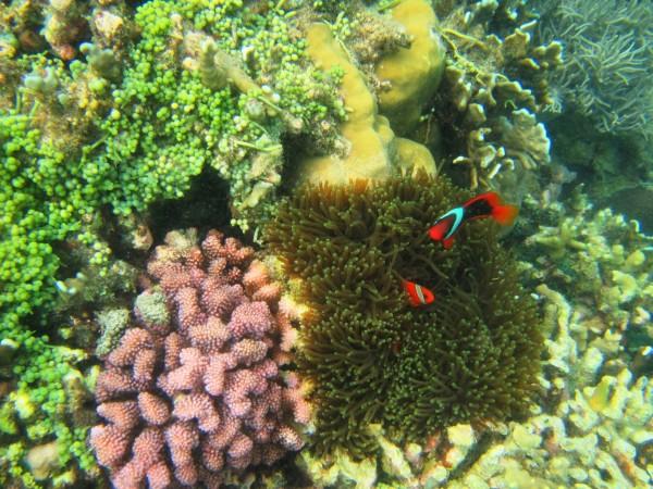 蔚蓝水世界 —— 菲律宾薄荷岛+杜马盖地潜水之旅