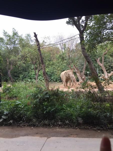 广州长隆动物园--广州游记--蚂蜂窝