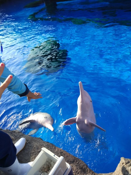 【长隆】● 广州野生动物园—珠海海洋王国 实用攻略