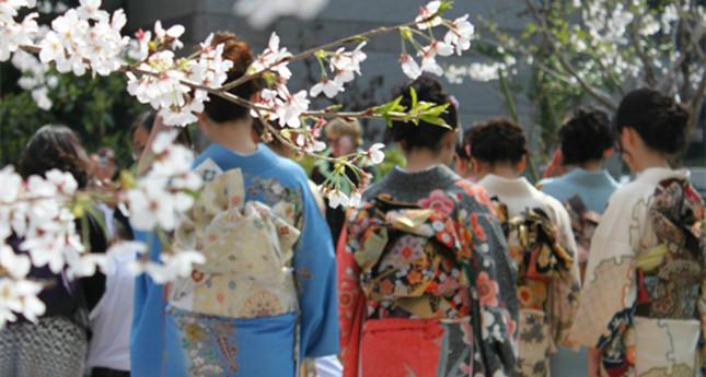 冲绳樱花盛开,快来赏花!