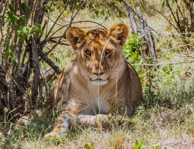 肯尼亚,一个诠释自然规律的动物乐园