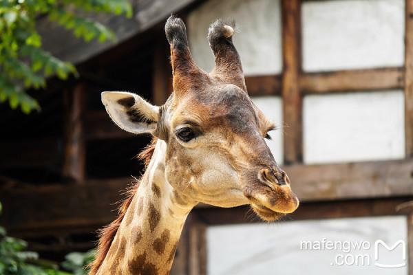 非洲小动物的风景图片大全大图