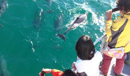 澳大利亚悉尼杰维斯湾精神号观海豚游船体验(出海观海豚)
