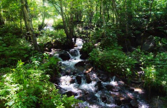 辽河源国家森林公园位于河北省平泉县大窝铺林场,因其为中国辽河的