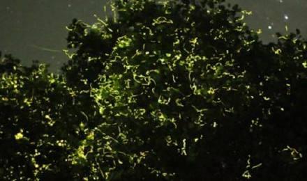 薄荷岛夜游 蜂蜜农场悬崖餐厅晚餐 浪漫萤火虫之旅(最美日落 超多