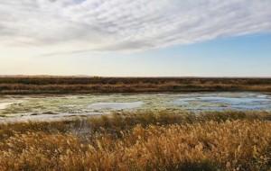 【乌海图片】骑到沙漠看海:你见过沙漠、看过大海,定未见过沙与海相依的浪漫