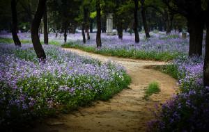 【曲阜图片】坟上的花