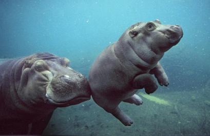 欧式梦幻唯美动物图片