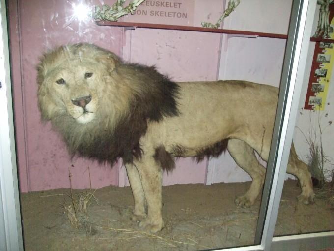【老廉走世界】南非印象(四十一)—布隆方丹私人动物园(private zoo)