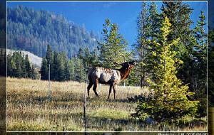 【班夫国家公园图片】梦幻落基山脉(Canadian Rocky)[2010影像]