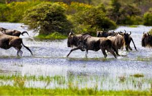 【肯尼亚图片】圆个纯真自然梦——肯尼亚光影纪念