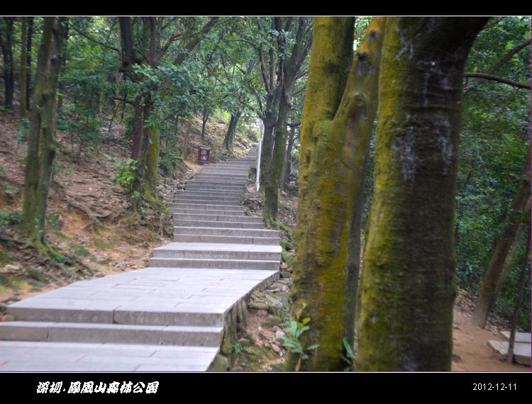 凤凰山森林公园 健行(图片)
