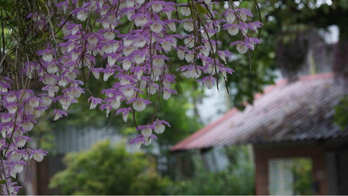 春天紫色的花蝴蝶