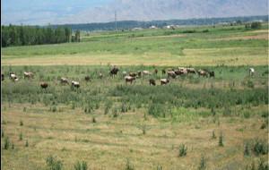 吉尔吉斯斯坦图片