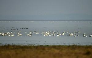 【鄱阳湖图片】第一次自驾到鄱阳湖拍鸟