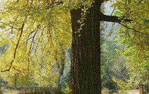【连州图片】秋天去连州扫黄