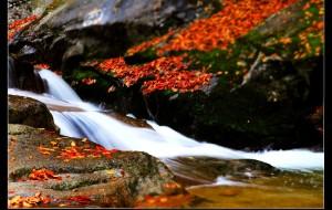 【南江图片】秋天的童话——光雾山观红叶