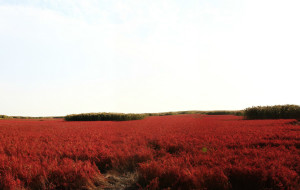 【东戴河图片】一路向东——辽东行,盘锦红海滩,丹东鸭绿江。