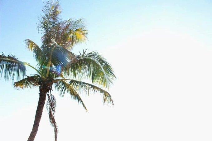 i绘画zuop海边椰子树