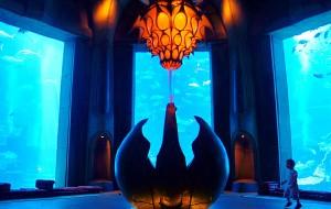 迪拜娱乐-亚特兰蒂斯水族馆-失落的空间