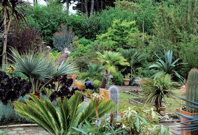 for Plante exotique exterieur