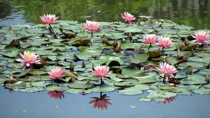 东京 成田 机场        鲜花园自然不会只有藤花,芍药,牡丹,睡莲,杜鹃