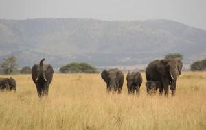 【乞力马扎罗图片】Jambo 坦桑尼亚