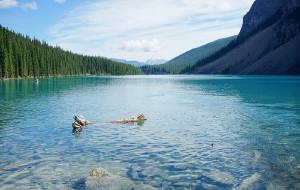 【维多利亚图片】~~加拿大自由行模式开启~~★1st Stop★: Calgary → 探索牛仔の故鄉之旅