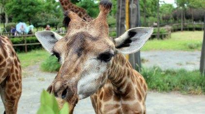 上海上海野生动物园门票