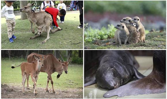 【亲子之旅】上海野生动物园景点门票(刷身份证入园)