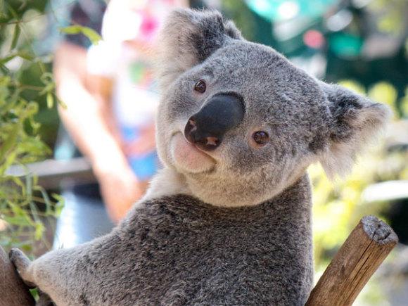 库兰达超值亲子欢乐动物园套餐(考拉野生动物园 蝴蝶园 百鸟园 空中