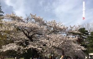 【仙台市图片】双城记——仙台东京,四月的美食与樱花(附羽田等实景图解)已更完
