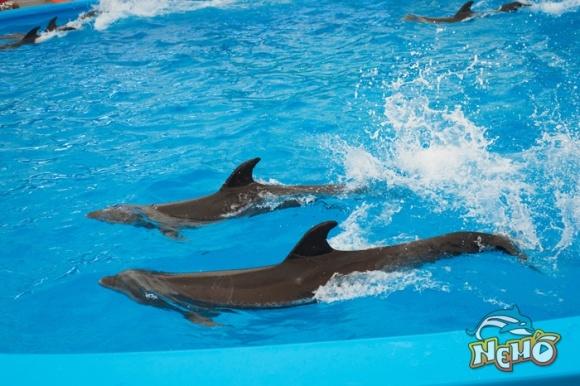 泰国 普吉岛 ne mo 尼莫海豚表演 (dolphins bay phuket)