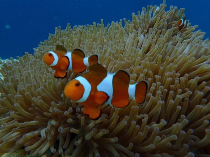 海里动物图片大全带名