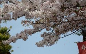 【关西图片】【日本自由行】【超详细】从关西到东京,无比难忘的珍贵回忆。