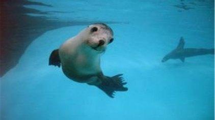 苏州苏州乐园海底世界门票