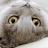 jojo_cat01