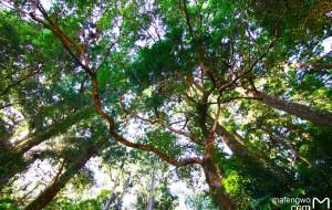 【白滨町图片】深绿的秘境—和歌山县熊野、那智、白滨、京都关西五日游