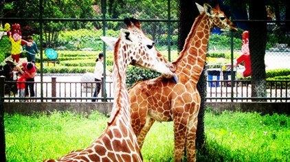 南京红山森林动物园门票