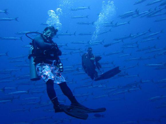 壁纸 海底 海底世界 海洋馆 水族馆 桌面 580_432