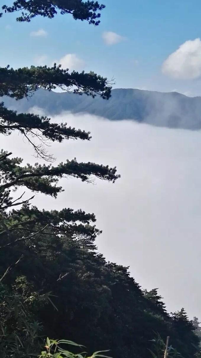 仙境之莽山国家森林公园