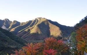 【门头沟图片】飘落在深秋的红叶